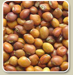 Myanmar Bean Exporter Su Aung Phyo Co., Ltd
